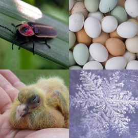 series of photos: baby pigeon, firefly, eggs