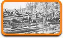 A log jam on the Saint Croix in the 1800s