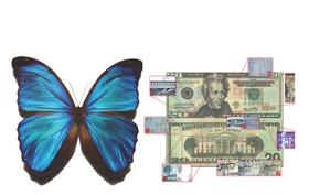 Iridescent butterfly & iridescent security images on currency