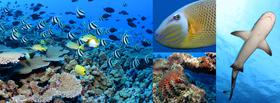 Coral reef environments