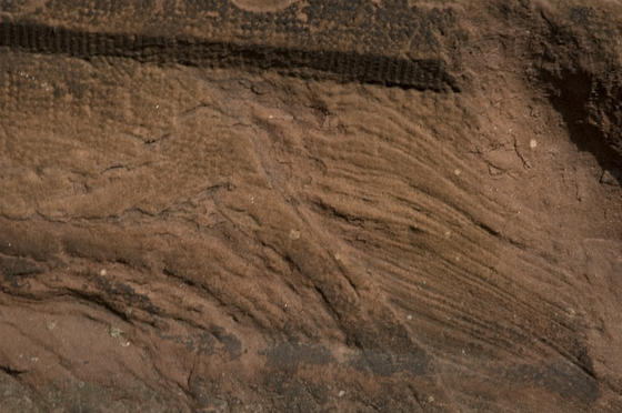 Hinckley sandstone formed at the bottom of the ocean more than 540 million years ago. Some stones still preserve ripple marks, testifying to its marine origin.