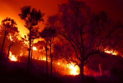 Climate adds fuel to Asian wildfire emissions.