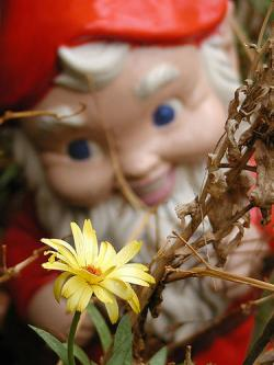 A gnome: Hunting flowers.