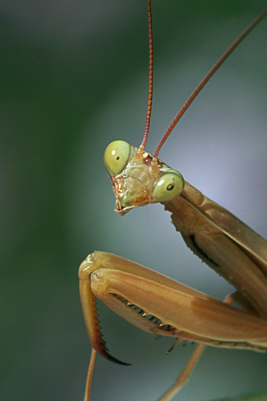 Aninimal Book: Hairworm Observed Emerging from Mantis | Science Buzz