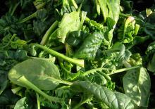 Fresh spinach: Courtesey ranjit