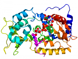Sirtuins: Silent Information Regulator Two (Sir2) proteins Sirtuins have been implicated in influencing aging and regulating transcription, apoptosis and stress resistance.