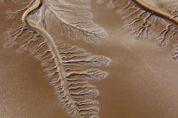 A now dry Colorado River delta branches into the Baja/Sonoran Desert near the Sea of Cortez