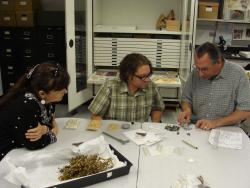 Sifting the Seed Crew Members: Jim Rock, Scott Shoemaker, and Roxanne Gould choosing seeds that fit within the strict size parameters for the project.