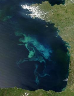A plankton bloom: Not the new bloom off of Canada, but this is what it looks like. The green stuff in the water is sucking up carbon dioxide and doing ... we don't know exactly what else yet.