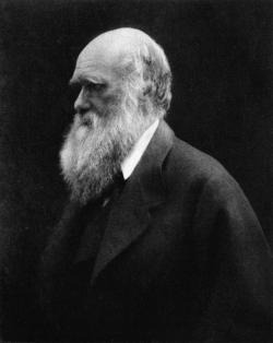 Charles Darwin, photographed by Julia Margaret Cameron, 1868