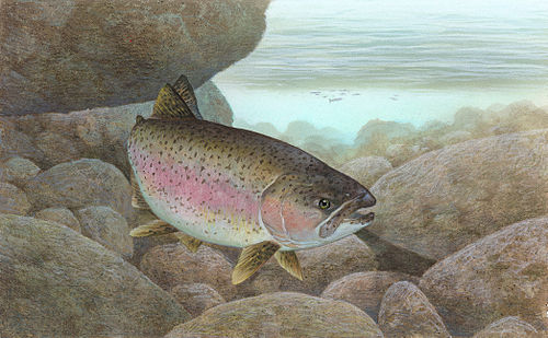 How To Make A Rainbow Trout Cake