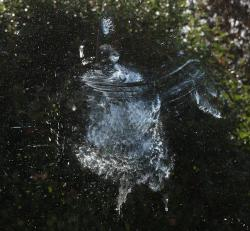Death by window: Some birds are injured or die when they smash into windows. This is a print left by a bird doing just that.