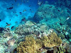 Microbes Coexist Peacefully with Other Marine Life: They are in there somewhere, even if you can't see them!