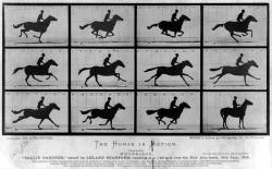 The Horse in Motion - Edward Muybridge: Eadweard Muybridge used photography to study animal movements - helping to answer a much debated question about whether or not all four of a horse's hooves left the ground at the same time during a gallop.