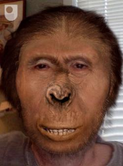 Great-great-great-etc.etc-grandpa Australopithecus afarensis: 3.7 million years ago.