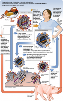 Antigenic shift in flu viruses: is when at least two different strains of a virus combine to form a new subtype having a mixture of the surface antigens of the two original strains.