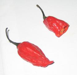 The Bhut Jolokia: Hot, spicy.  Image courtesy of Wikimedia Commons.