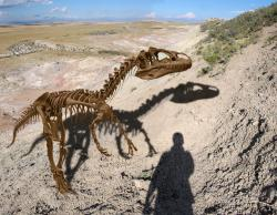 """Big Al"" the Allosaurus in Wyoming: Paleontologist O.C. Marsh named the carnivorous dinosaur Allosaurus fragillis in 1877 from fossil bones discovered in Colorado. The name refers to the strange lightness of the creature's vertebrae (Allosaurus = different lizard; fragillis = fragile)."