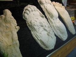 Big Feet: They come in all shapes and sizes.  (Photo courtesy of Rakka on flickr.com)