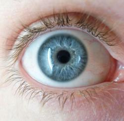 Blue for you: Danish researchers have concluded that the genetic trait that leads to blue eyes comes from the mutation of one gene some 6,000 to 10,000 years ago.