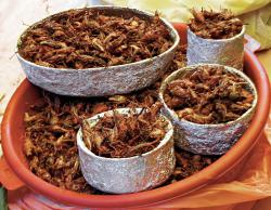 Yum!: Roasted crickets at a market in Mexico.