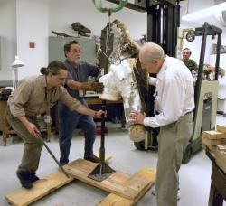 Raising the Skull: Once the mount has been firmly attached to the skull the entire apparatus has to be lifted with a forklift so it can be oriented correctly and attached to the mount's base.