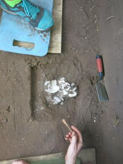 Shell Midden: A group of shells all located together while we were excavating block 1 of the Sheffield Site.
