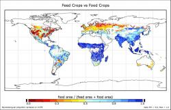 How much of what we grow gets eaten?: Crops grown in the blue areas are mostly eaten by people. But in the yellow and red areas, the crops are mostly used as animal feed. Say what?