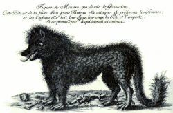 """Beast of Gevaudan: The text above the drawing translates to, """"Drawing of the monster that afflicts Gevaudan. This beast is the size of a young bull. It prefers to attack women and children. It drinks their blood, cuts their head off, and carries them away. 2700 francs are promised to he who kills this animal."""" (Image from Wikimedia Commons)"""