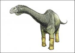 Restoration of Haplocanthosaurus: a Late Jurassic sauropod whose remains are found in Colorado, Utah, and Wyoming.