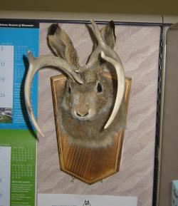 The jackalope in my cube.