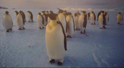 All eyes on penguin poop: Hey guys, don't worry where you poop. No one's gonna see where you've done it, especially any prying eyes from out in space.