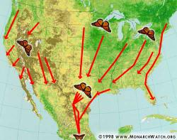 Monarch migration patterns: Image courtesy Monarch Watch.