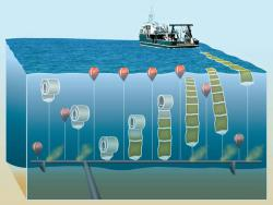 "NASAAlgae: An illustration of a NASA's offshore algae harvesting and turning into fuel. ""The blue is turning green,"" said a team leader, Jonathan Trent, a bioengineer at NASA Ames Research Center."