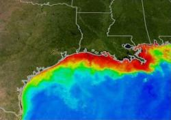 Gulf of Mexico Dead Zone: Nitrates washed off of cropland and delivered to the ocean by the Mississippi River feed big algae blooms, seen as red in this false-color satellite image.  Bacterial decomposition of the dying algae consumes all oxygen in the water, producing a large area uninhabitable by fish and other sea creatures.
