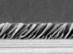 Silica nanorods make a super dark surface.: This SEM image shows the silica nanorods mounted at exactly 45 degrees which makes the surface super anti-reflective.