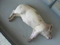 Pig, @4pm, 9-19-08: It's calm, 80 degrees, and sunny, with 39% humidity.   Not much is going on out there.