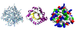 Protein structure: three representations of the protein triose phosphate isomerase.