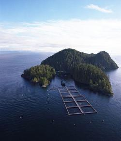 A salmon farm: Nets keep the salmon in and the predators out, but disease, parasites, and pollution move through freely. But salmon farms reduce stress on wild salmon populations. It's complicated...