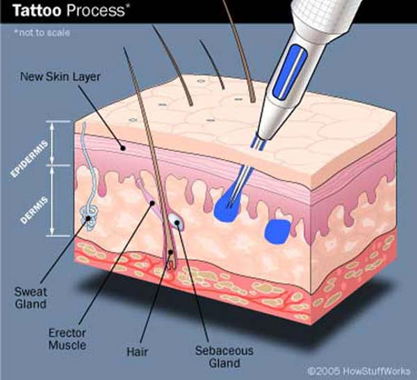 Pain science buzz for Process of tattooing