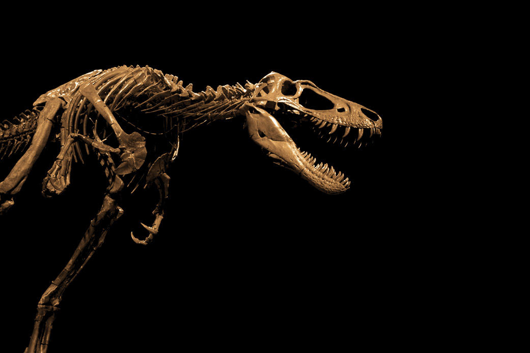 tyrannosaurus rex research paper Between a t rex's powerful jaws, bones of its prey exploded image new research suggests that the tyrannosaurus rex crushed its prey with 7,800 pounds of force  a paleontologist from the .