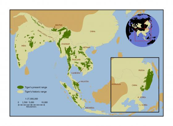 Current tiger range map in relation to historic distribution