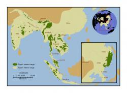 Current tiger range map in relation to historic distribution: Image courtesy Save the Tiger Fund.