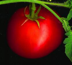 Tomato: Not as sexy as you thought