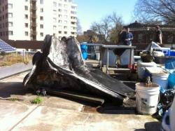 Yes, that's a whale skull! Whale skulls and solar panels – things you don't normally see together.