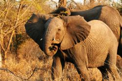 Are you tracking me?: GPS technology saved the life of an elephant in Africa last week and is being used extensively to track the migration patterns of many types of animals.