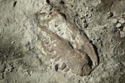 Why not dig a dinosaur this summer?