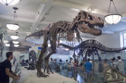 T-rex could run, but he couldn't hide: More than one asteroid impact may have wiped out non-avian dinosaurs.