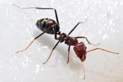What, I can only lock this from the outside?: Scientists have observed behavior in ants in Brazil where a small group of ants sacrifice themselves each night for the good of the colony by covering the colony entrance from the outside, leaving them outside at night exposed to all sorts of natural forc
