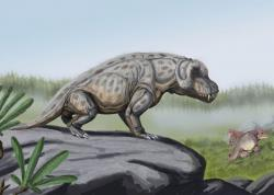 A Permian anteosaurus: He feels vaguely nervous, and oddly sweaty.  (image courtesy of Wikipedia Commons)